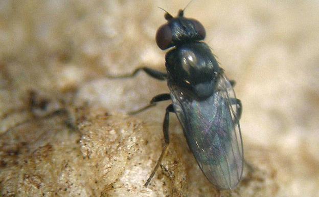 5 remedios caseros para espantar a las moscas la verdad - Como espantar moscas ...